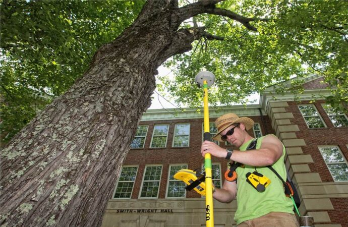 Arborist Consultations-Vista CA Tree Trimming and Stump Grinding Services-We Offer Tree Trimming Services, Tree Removal, Tree Pruning, Tree Cutting, Residential and Commercial Tree Trimming Services, Storm Damage, Emergency Tree Removal, Land Clearing, Tree Companies, Tree Care Service, Stump Grinding, and we're the Best Tree Trimming Company Near You Guaranteed!