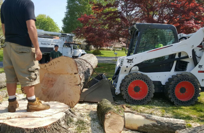 Bressi Ranch-Vista CA Tree Trimming and Stump Grinding Services-We Offer Tree Trimming Services, Tree Removal, Tree Pruning, Tree Cutting, Residential and Commercial Tree Trimming Services, Storm Damage, Emergency Tree Removal, Land Clearing, Tree Companies, Tree Care Service, Stump Grinding, and we're the Best Tree Trimming Company Near You Guaranteed!