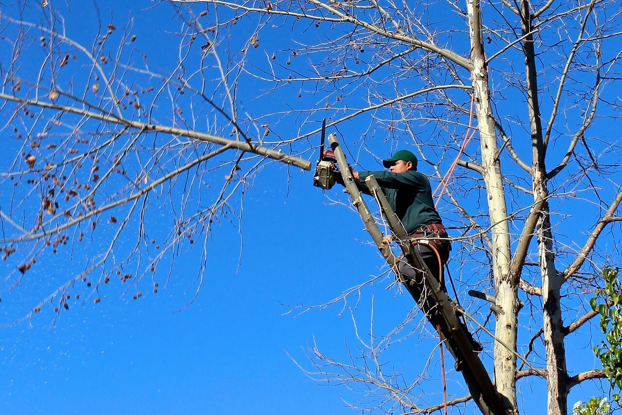 Contact Us-Vista CA Tree Trimming and Stump Grinding Services-We Offer Tree Trimming Services, Tree Removal, Tree Pruning, Tree Cutting, Residential and Commercial Tree Trimming Services, Storm Damage, Emergency Tree Removal, Land Clearing, Tree Companies, Tree Care Service, Stump Grinding, and we're the Best Tree Trimming Company Near You Guaranteed!