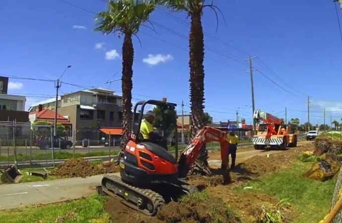 Palm Tree Removal-Vista CA Tree Trimming and Stump Grinding Services-We Offer Tree Trimming Services, Tree Removal, Tree Pruning, Tree Cutting, Residential and Commercial Tree Trimming Services, Storm Damage, Emergency Tree Removal, Land Clearing, Tree Companies, Tree Care Service, Stump Grinding, and we're the Best Tree Trimming Company Near You Guaranteed!