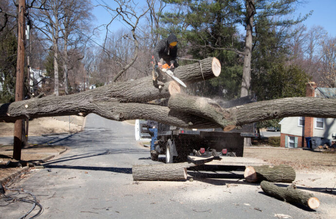 Residential Tree Services-Vista CA Tree Trimming and Stump Grinding Services-We Offer Tree Trimming Services, Tree Removal, Tree Pruning, Tree Cutting, Residential and Commercial Tree Trimming Services, Storm Damage, Emergency Tree Removal, Land Clearing, Tree Companies, Tree Care Service, Stump Grinding, and we're the Best Tree Trimming Company Near You Guaranteed!