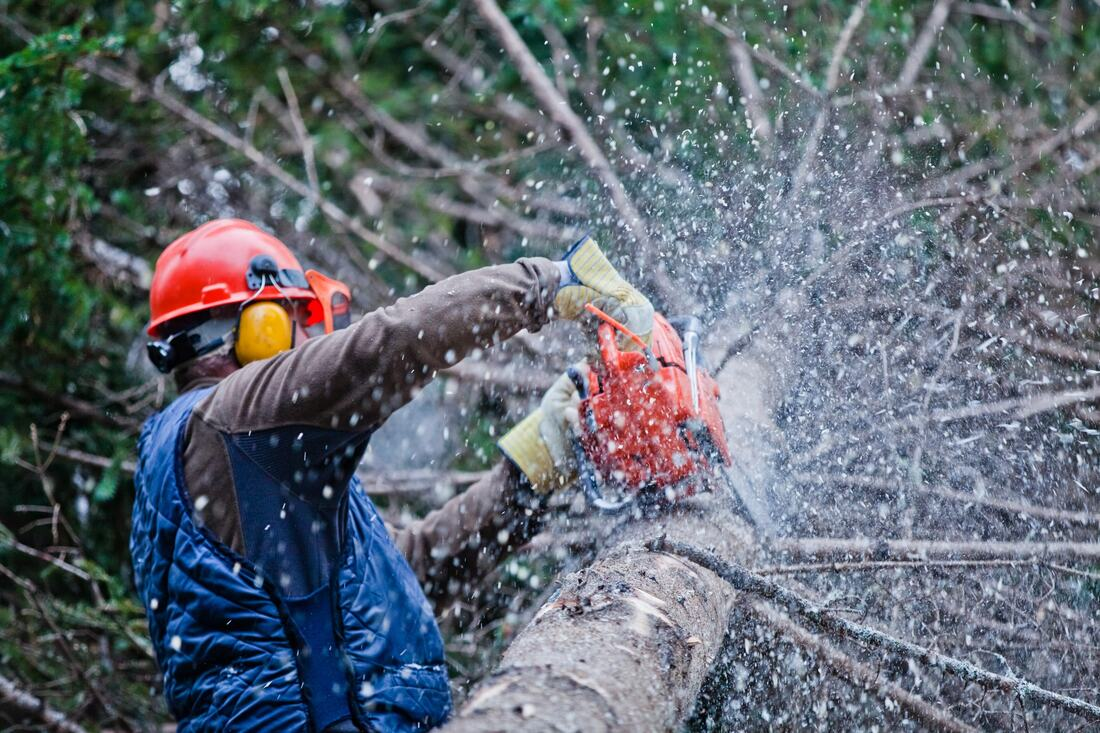 San Luis Rey-Vista CA Tree Trimming and Stump Grinding Services-We Offer Tree Trimming Services, Tree Removal, Tree Pruning, Tree Cutting, Residential and Commercial Tree Trimming Services, Storm Damage, Emergency Tree Removal, Land Clearing, Tree Companies, Tree Care Service, Stump Grinding, and we're the Best Tree Trimming Company Near You Guaranteed!