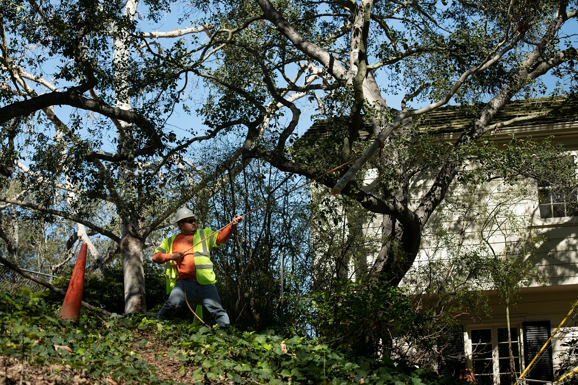 San Marcos-Vista CA Tree Trimming and Stump Grinding Services-We Offer Tree Trimming Services, Tree Removal, Tree Pruning, Tree Cutting, Residential and Commercial Tree Trimming Services, Storm Damage, Emergency Tree Removal, Land Clearing, Tree Companies, Tree Care Service, Stump Grinding, and we're the Best Tree Trimming Company Near You Guaranteed!