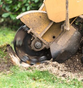 Stump Grinding-Vista CA Tree Trimming and Stump Grinding Services-We Offer Tree Trimming Services, Tree Removal, Tree Pruning, Tree Cutting, Residential and Commercial Tree Trimming Services, Storm Damage, Emergency Tree Removal, Land Clearing, Tree Companies, Tree Care Service, Stump Grinding, and we're the Best Tree Trimming Company Near You Guaranteed!