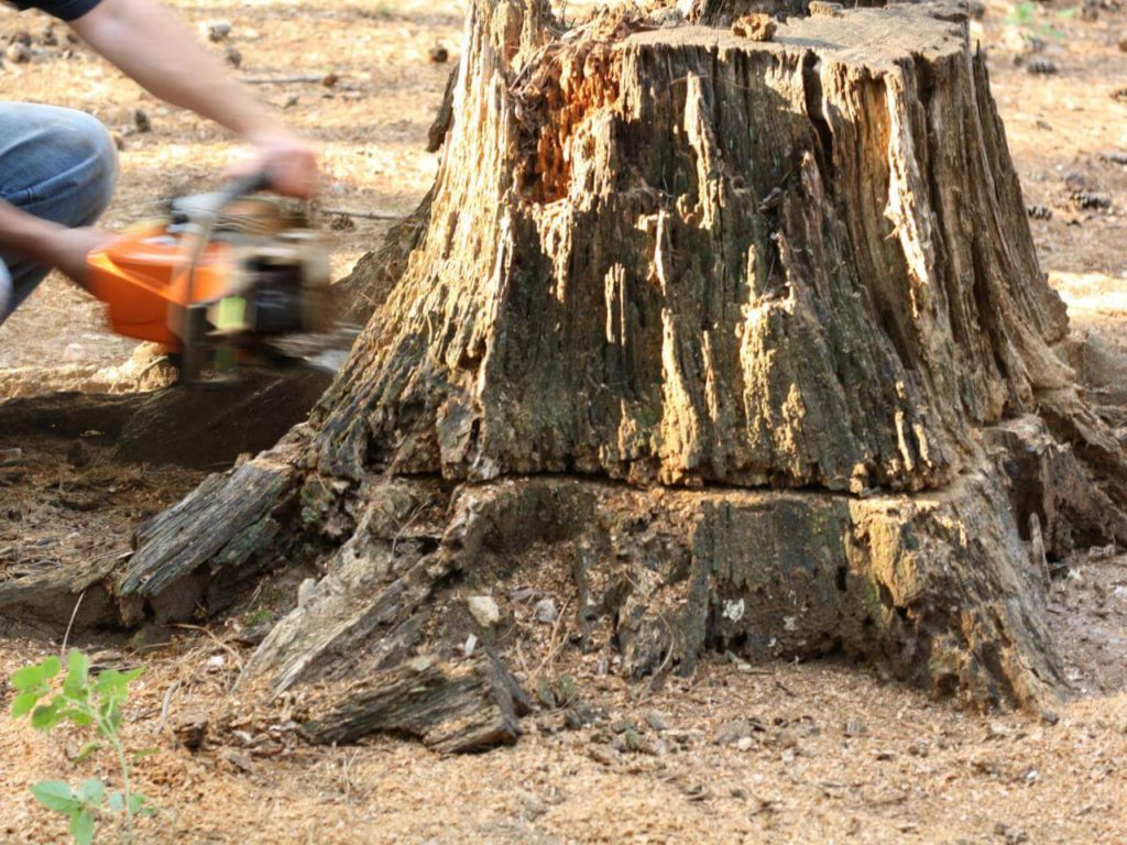 Stump Removal-Vista CA Tree Trimming and Stump Grinding Services-We Offer Tree Trimming Services, Tree Removal, Tree Pruning, Tree Cutting, Residential and Commercial Tree Trimming Services, Storm Damage, Emergency Tree Removal, Land Clearing, Tree Companies, Tree Care Service, Stump Grinding, and we're the Best Tree Trimming Company Near You Guaranteed!