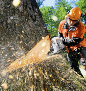 Tree Cutting-Vista CA Tree Trimming and Stump Grinding Services-We Offer Tree Trimming Services, Tree Removal, Tree Pruning, Tree Cutting, Residential and Commercial Tree Trimming Services, Storm Damage, Emergency Tree Removal, Land Clearing, Tree Companies, Tree Care Service, Stump Grinding, and we're the Best Tree Trimming Company Near You Guaranteed!