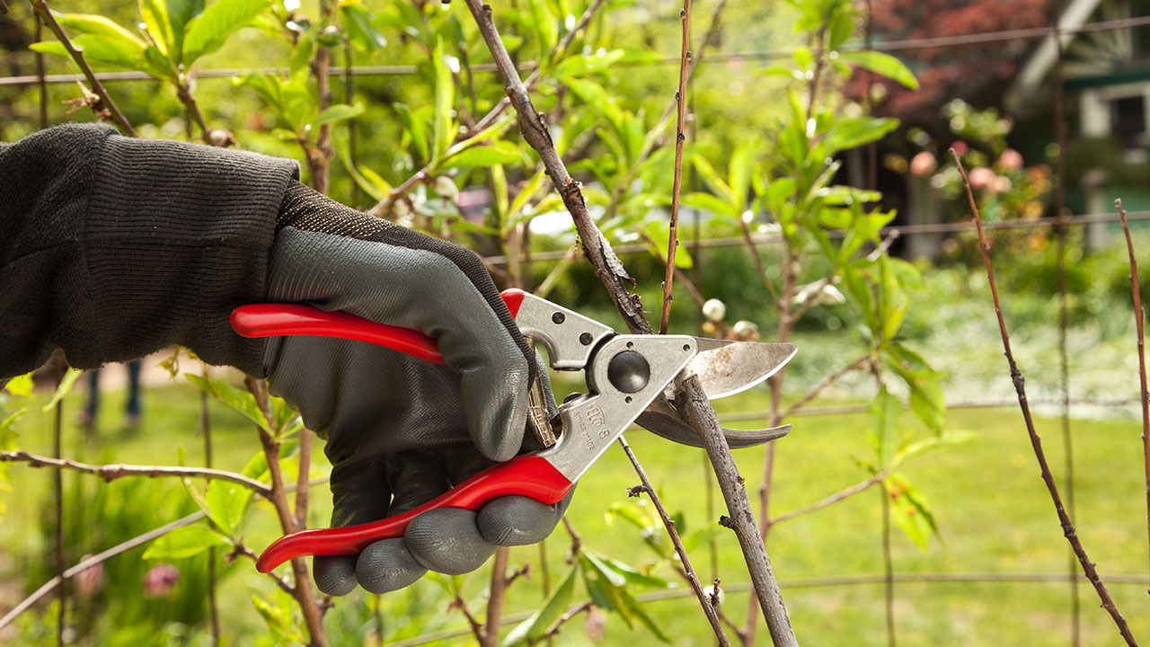 Tree Pruning-Vista CA Tree Trimming and Stump Grinding Services-We Offer Tree Trimming Services, Tree Removal, Tree Pruning, Tree Cutting, Residential and Commercial Tree Trimming Services, Storm Damage, Emergency Tree Removal, Land Clearing, Tree Companies, Tree Care Service, Stump Grinding, and we're the Best Tree Trimming Company Near You Guaranteed!