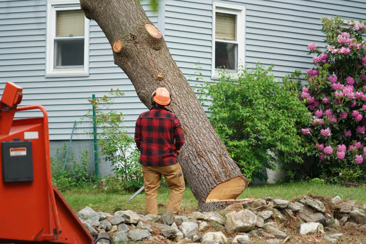 Tree Removal-Vista CA Tree Trimming and Stump Grinding Services-We Offer Tree Trimming Services, Tree Removal, Tree Pruning, Tree Cutting, Residential and Commercial Tree Trimming Services, Storm Damage, Emergency Tree Removal, Land Clearing, Tree Companies, Tree Care Service, Stump Grinding, and we're the Best Tree Trimming Company Near You Guaranteed!