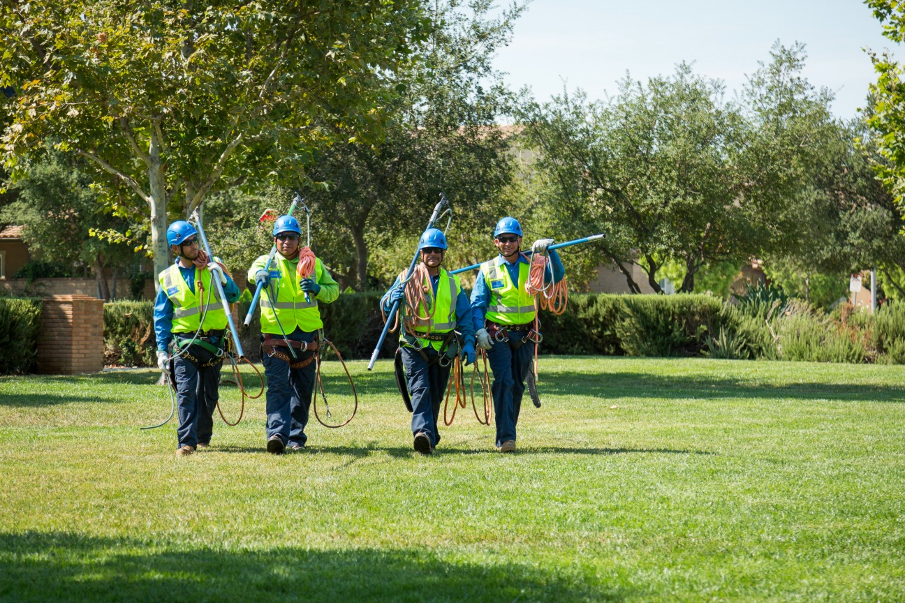Tri-City-Vista CA Tree Trimming and Stump Grinding Services-We Offer Tree Trimming Services, Tree Removal, Tree Pruning, Tree Cutting, Residential and Commercial Tree Trimming Services, Storm Damage, Emergency Tree Removal, Land Clearing, Tree Companies, Tree Care Service, Stump Grinding, and we're the Best Tree Trimming Company Near You Guaranteed!
